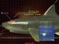 National Geographic: Хищники глубин / National Geographiс: Shark Sonics (2004) DVDRip